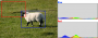 courses:sheephistogramy.png